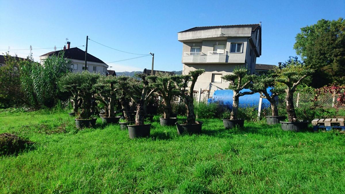 Servicios  de Jardinería en Ourense - Xursam